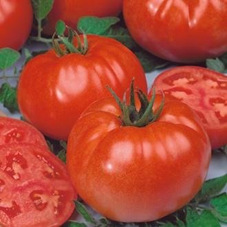 Graines de Tomate Américaine x10