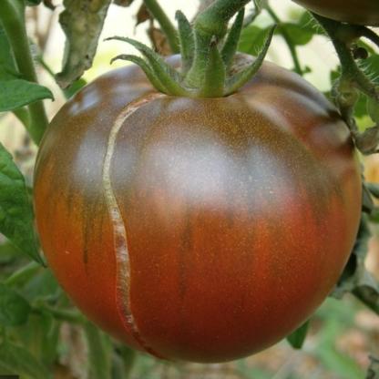 Graines de Tomate « Noires de Crimée » x10