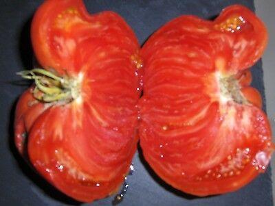 "Graines de Tomate ""Russe"" x10"
